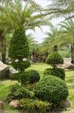 Dwarf shrubs Royalty Free Stock Image