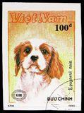 Dwarf Spaniel (Canis lupus familiaris), International stamp exhibition New Zealand '90 (Dogs) serie, circa 1990. MOSCOW, RUSSIA - NOVEMBER 10, 2018: A stamp stock photos
