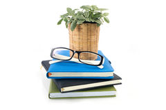 Dwarf tree on flowerpot and  eyeglasses over stack of books on i Stock Photo