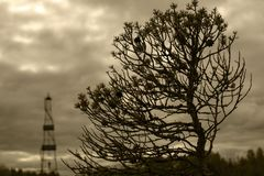 The dwarf tree and oil drilling in the background.Black-and-white photograph. Royalty Free Stock Photography