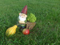 Funny garden gnome with wheelbarrow and apple, pumpkin and broccoli Stock Photos