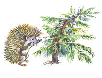 Dwarfish fur-tree and hedgehog. Royalty Free Stock Images