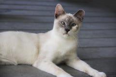 Dwars eyed witte kat die op een portiek leggen stock foto's