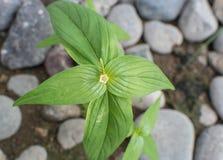 Dwars groene bladeren royalty-vrije stock foto's
