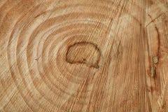 Dwarsdoorsnede van boom Stock Foto