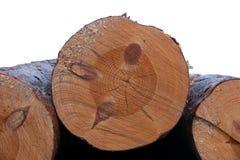 Dwarsdoorsnede van boom met knopen Royalty-vrije Stock Foto's