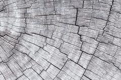 Dwarsdoorsnede van boomboomstam royalty-vrije stock afbeeldingen