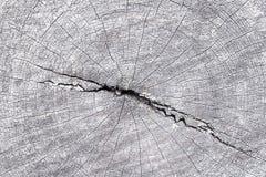 Dwarsdoorsnede van boomboomstam stock afbeeldingen