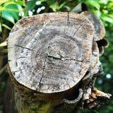 Dwarsdoorsnede van boomboomstam stock foto's
