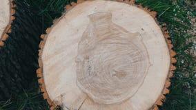 Dwarsdoorsnede van de boom Ongebruikelijk patroon op de besnoeiing van een boom in de vorm van menselijk hart of een vaas stock videobeelden