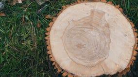 Dwarsdoorsnede van de boom Ongebruikelijk patroon op de besnoeiing van een boom in de vorm van menselijk hart of een vaas stock footage