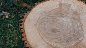 Dwarsdoorsnede van de boom Ongebruikelijk patroon op de besnoeiing van een boom in de vorm van menselijk hart of een vaas stock video