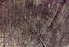 Dwarsdoorsnede van de oude boom Achtergrond van de houten muur van de planktextuur met geselecteerde toonkleur De abstracte achte Stock Foto's