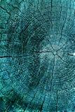 Dwarsdoorsnede van de oude boom Achtergrond van de houten muur van de planktextuur met geselecteerde toonkleur De abstracte achte Stock Afbeeldingen
