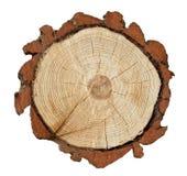 Dwarsdoorsnede van een boomboomstam Royalty-vrije Stock Afbeeldingen