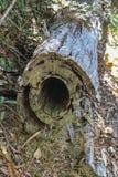 Dwarsdoorsnede van gesneden boom met holle kern die op grond leggen - selectieve nadruk royalty-vrije stock afbeeldingen