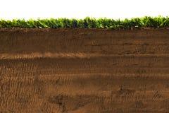 Dwarsdoorsnede van gras die op wit wordt geïsoleerd Royalty-vrije Stock Fotografie