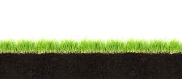 Dwarsdoorsnede van grond en gras stock afbeeldingen