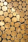 Dwarsdoorsnede van het hout Stock Foto