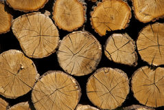 Dwarsdoorsnede van het hout Een stapel van droog die brandhout voor voor de winter wordt opgeslagen Stock Afbeeldingen