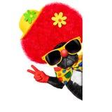 Dwaze clownhond Royalty-vrije Stock Afbeelding