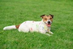 Dwaze slordige die hond met kleurrijke verf op groen gras wordt bevlekt royalty-vrije stock afbeelding