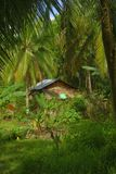Dwelling in the jungle. On the island of siargao, Philippines Stock Images
