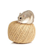Dwerg hamster Royalty-vrije Stock Afbeelding