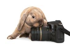 Dwerg konijn met een digitale camera SLR. Royalty-vrije Stock Foto