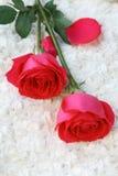 dwie czerwone róże Zdjęcie Royalty Free