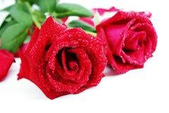 dwie czerwone róże Obrazy Royalty Free