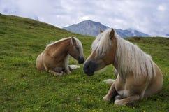 dwie piękne konie Obraz Royalty Free