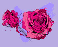 dwie róże Obraz Royalty Free