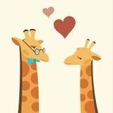 dwie żyrafy Obrazy Royalty Free