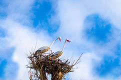 Dźwigowi ptaki jako symbol ekologia Zdjęcia Royalty Free