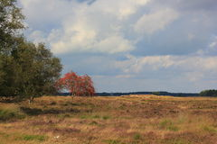 Dwingelderveld in Drenthe, heathland, Netherlands. Dwingelderveld, heathland, field with all kinds of heath, grasses, trees, plants. In Drenthe the Netherlands Stock Photo