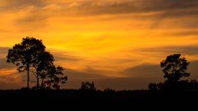 Dwoisty drzewo na zmierzchu czasie Zdjęcie Stock