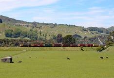 Dwoisty głowiasty oleju napędowego pociąg ciągnie towarowych furgony w dalekim regionie Nowa Zelandia obraz stock