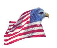Dwoisty ujawnienie łysy orzeł na flaga amerykańskiej zdjęcie stock