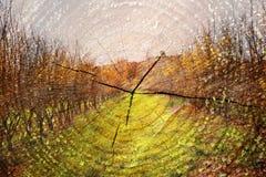 Dwoisty ujawnienie drzewa przy drewnami i cięcie drzewnym bagażnikiem w kontekście niebieskie chmury odpowiadają trawy zielone ni Zdjęcia Stock