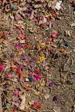 Dyed colorful flowers on the soil ground. Dyed colorful dry flowers on the soil ground stock images