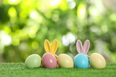 Dyed Easter eggs and bunny ears on green grass against blurred background. Space for text royalty free stock photo