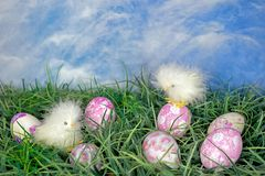 Dyed Easter eggs with chicks Stock Photos