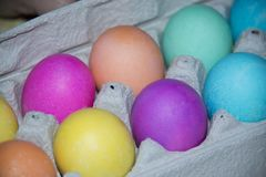 Dyed Easter eggs in many colors laying in egg carton for holiday egg hunt celebration. Dyed Easter eggs in many colors yellow, pink, purple and blue laying in royalty free stock photo