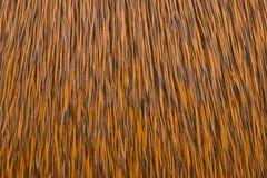 Dyed fur deer Stock Photo