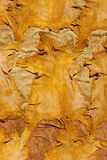 Dyed Goat Skins Royalty Free Stock Photo