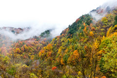 Dyed Mountains and Forests,Cloud and Mist Stock Photo