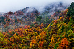 Dyed Mountains and Forests,Cloud and Mist Royalty Free Stock Image