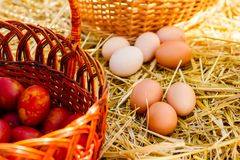 Dyed and unpainted fresh chicken eggs. Unpainted fresh chicken eggs lie on the straw next to the basket near the brown painted eggs Royalty Free Stock Image