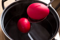 Dyeing eggs. Freshly red painted easter egg royalty free stock images
